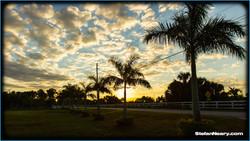 Royal Palms roadside