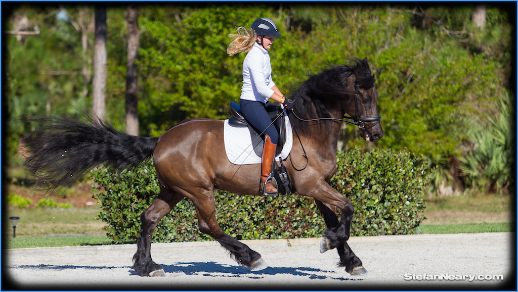Meagan Davis Dressage