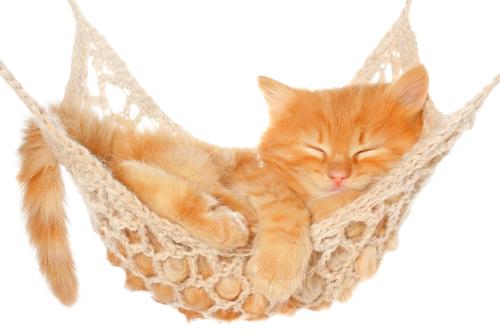 kitten hammock