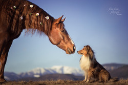 horse and dog 2
