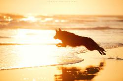 dog beach run