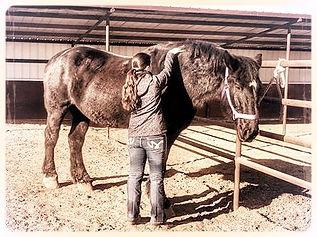 faw horse 4_edited.jpg
