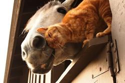 horse & cat 1