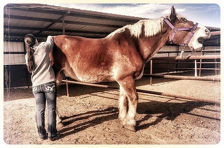 Faw horse 3_edited.jpg