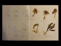 1954 flower book page.jpg