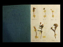 1953 Flower book.jpg