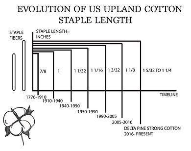 EVOLUTION OF UPLAND COTTON copy.jpg
