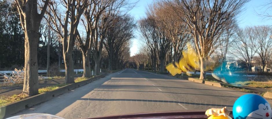 台山公園の風景