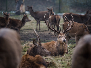 A winter morning at Bushy Park