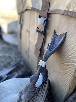 banded goose.jpg