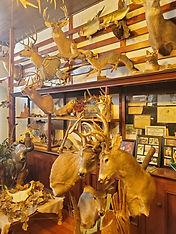 trophy room pic 2.jpg