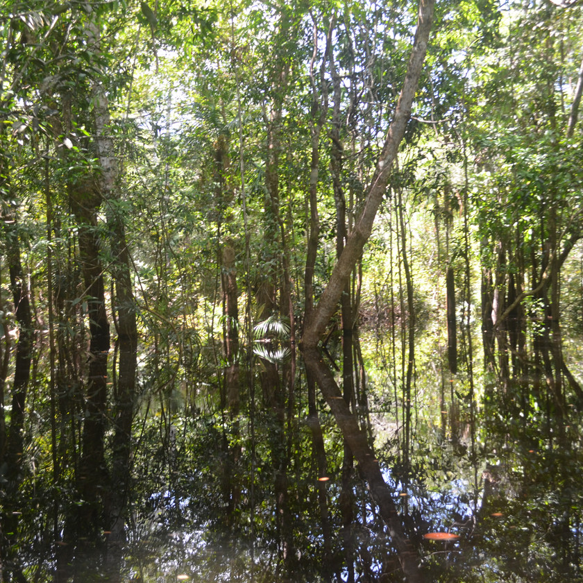 Flooded forests provide numerous ecosystem services