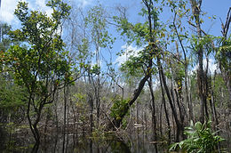 Designing better fire management policies for the post-conflict Colombian Amazon