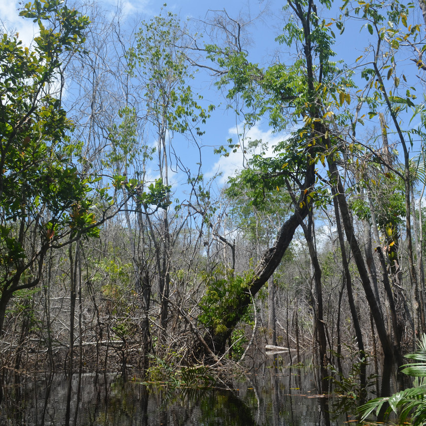 Flooded forests are increasingly been affected by fires, with catastrophic consequences for their biodiversity and ecosystem services