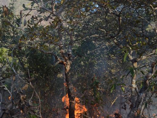 restoring fire in the cerrado