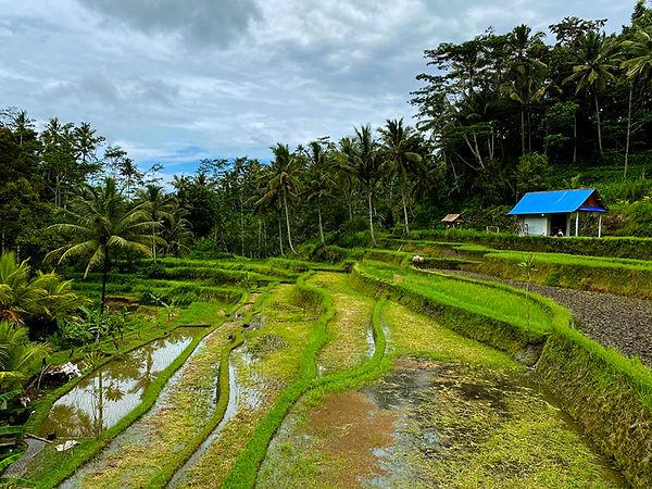 Gunung Kawi _web 14.jpg