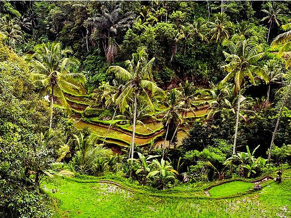 Gunung Kawi _web 17.jpg