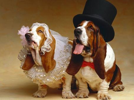 Ametlikult abielus - vähemalt 4-nda perioodi lõpuni :)