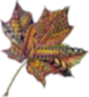 Botangle Logo - Zentangled Leaf