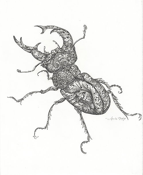 The Baroque Beetle - Original