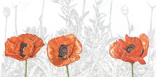 Pinewood Springs Poppies - Print