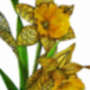 reiser_dafodil_color__48853.1574728772.1