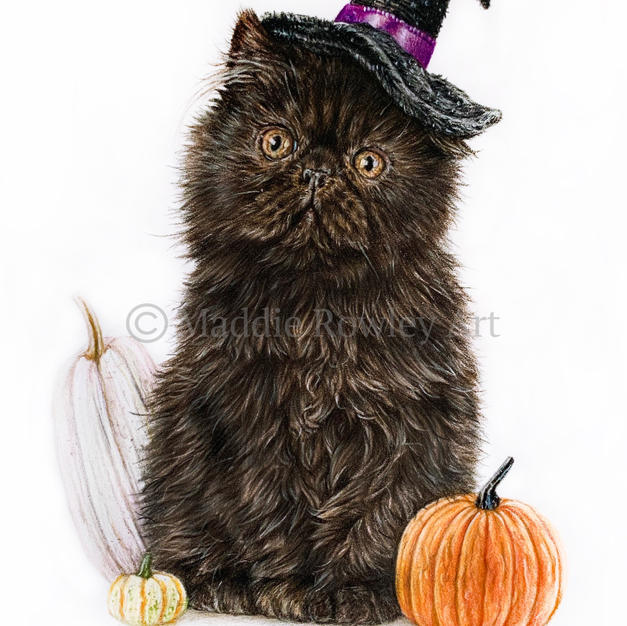 The Witch Kitty