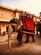 eddycurry_Farbenfrohes Indien_2017 (16).