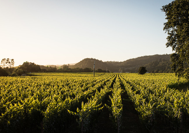 Trailside Vineyard Rutherford.jpg