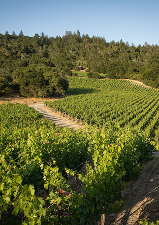 Winery Vineyard St Helena.jpg