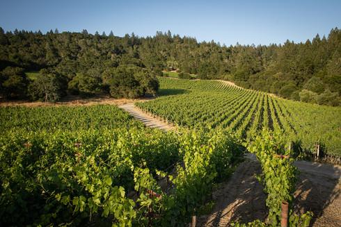 Winery Vineyard St Helena.jpg