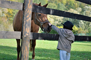 horse-5133657_1280.jpg
