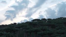 Lava Eruption CGI.mp4