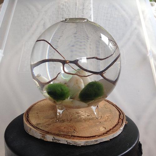 Live Marimo Moss Ball Aquarium