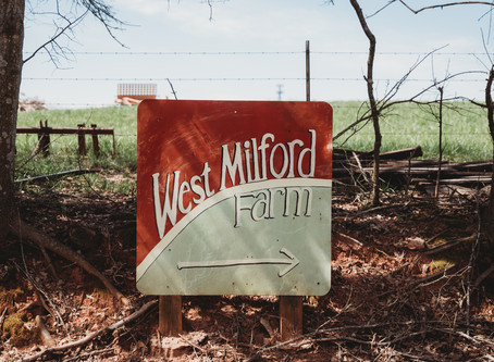 Powers Pre-Wedding Shots at West Milford Farm!