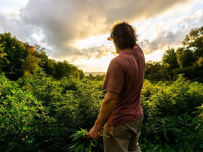 Gov. Cuomo Unveils his 2020 Plan to Regulate Cannabis