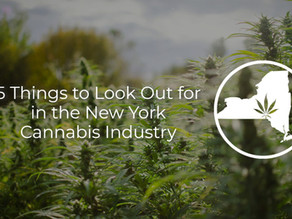 Cannabis in New York: What You Need to Know