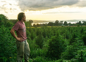 Hemp Becomes Booming Crop for New York Farmers