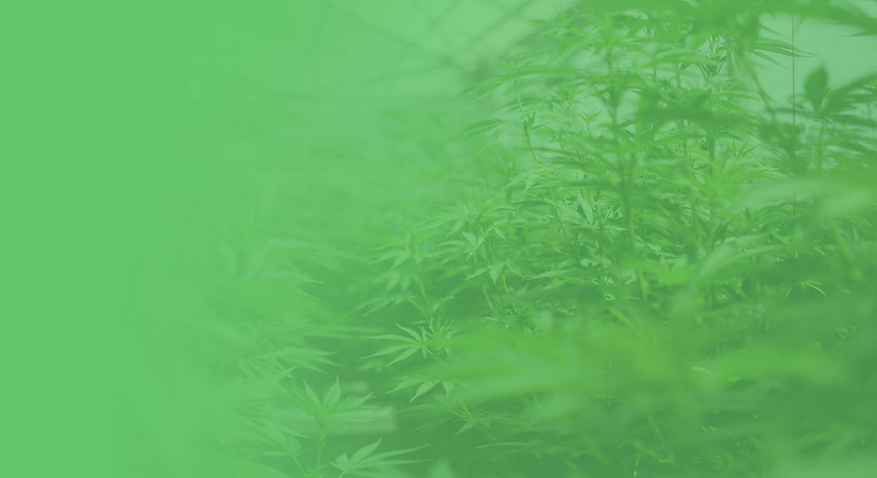 Green Theme Hemp Plants Background
