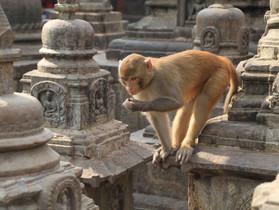 Kathmandu, Népal - La ville en images