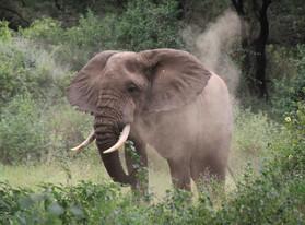 Région d'Arusha, Tanzanie - Safari au Lac Manyara