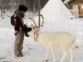 Saxnäs, Suède - Rencontre avec des éleveurs de rennes