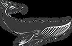 Whale, Balaine, Sea Sheperd