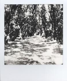 33 - 20/06/07 - Le Croisic, parc Penn Avel
