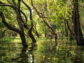 L'Enfer vert - Survivre en forêt pendant le confinement