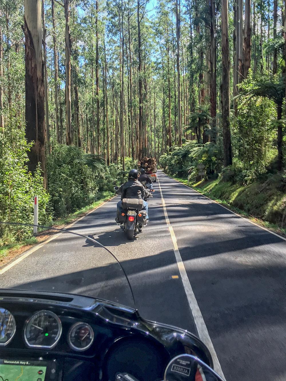 The Black Spur outside Melbourne is a greta Harley Davidson Ride