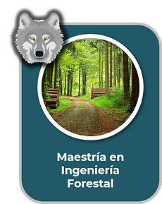 Maestria en Ingenieria Forestal 2.png
