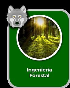 Ingenieria Forestal 2.png