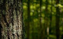 Foto_aprovechamiento_bosque_agua_2.jpg