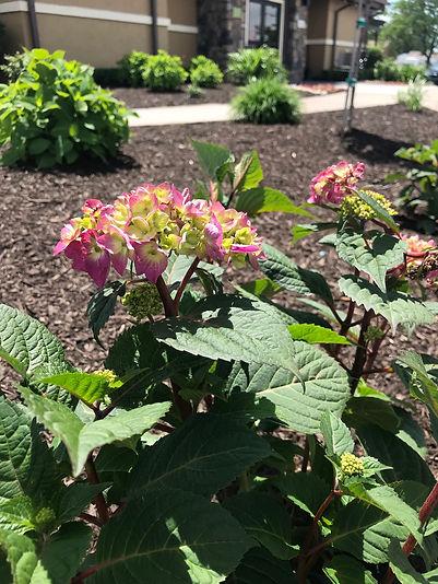 Lawn Fertilization, Landscape Design, Outdoor Lighting Canton, Dearborn, Livonia MI | Turf Concepts Landscape Management